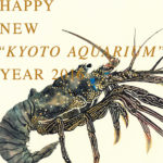 "HAPPY NEW ""KYOTO AQUARIUM"" YEAR"
